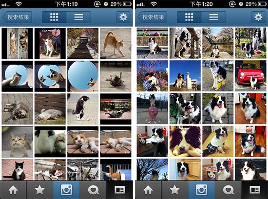 instagram 有趣用户-猫叔-狗姐